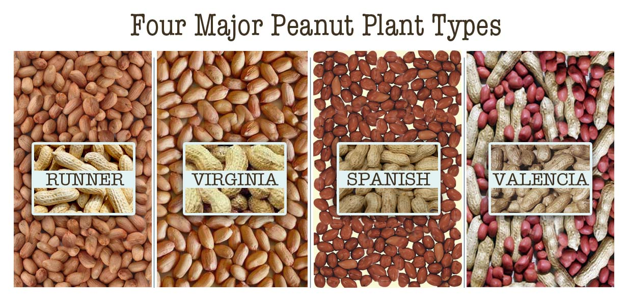 GPC Peanut Plant Types Edited